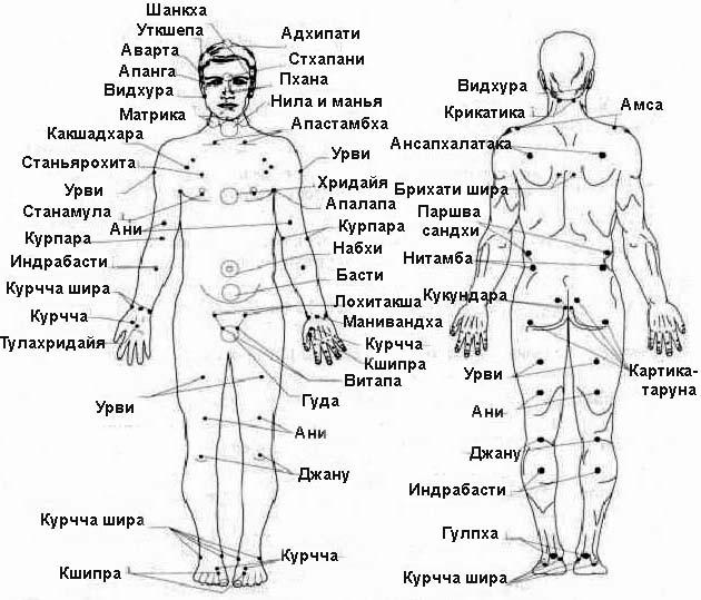 """Фото  """"Смертельные и болевые точки на теле человека """" ."""