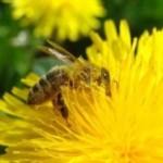 Пчёлы и мухи. Притча