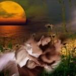 Как толковать любовные сны и символы