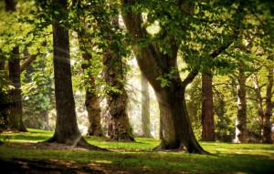 лечение с помощью деревьев
