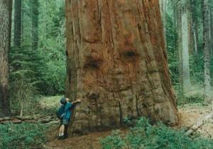 лечение деревьями