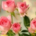 """Медитация """"Розовые цветы"""""""